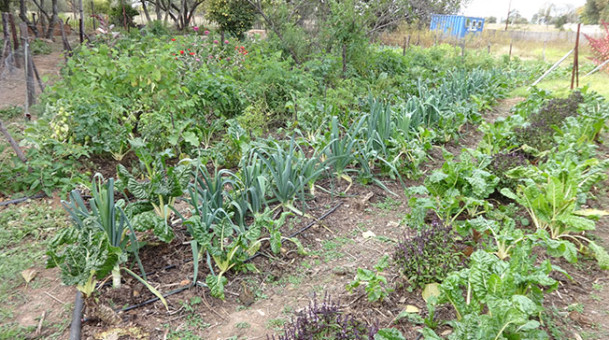Herbal Parks initiative in khammam