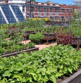 Why rooftop Agriculture?